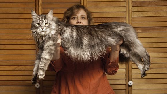 World's Longest Cat