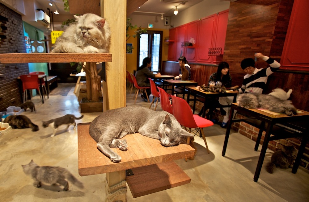 Cat Cafe in Korea and Japan