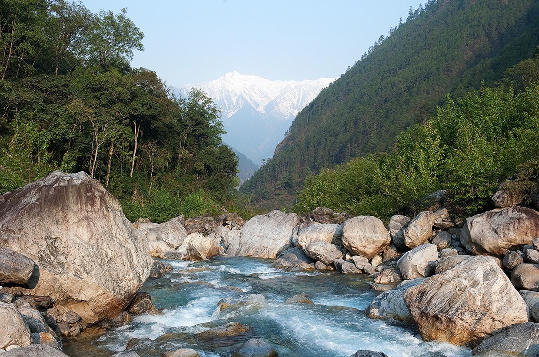 Red Panda Eastern Himalayas