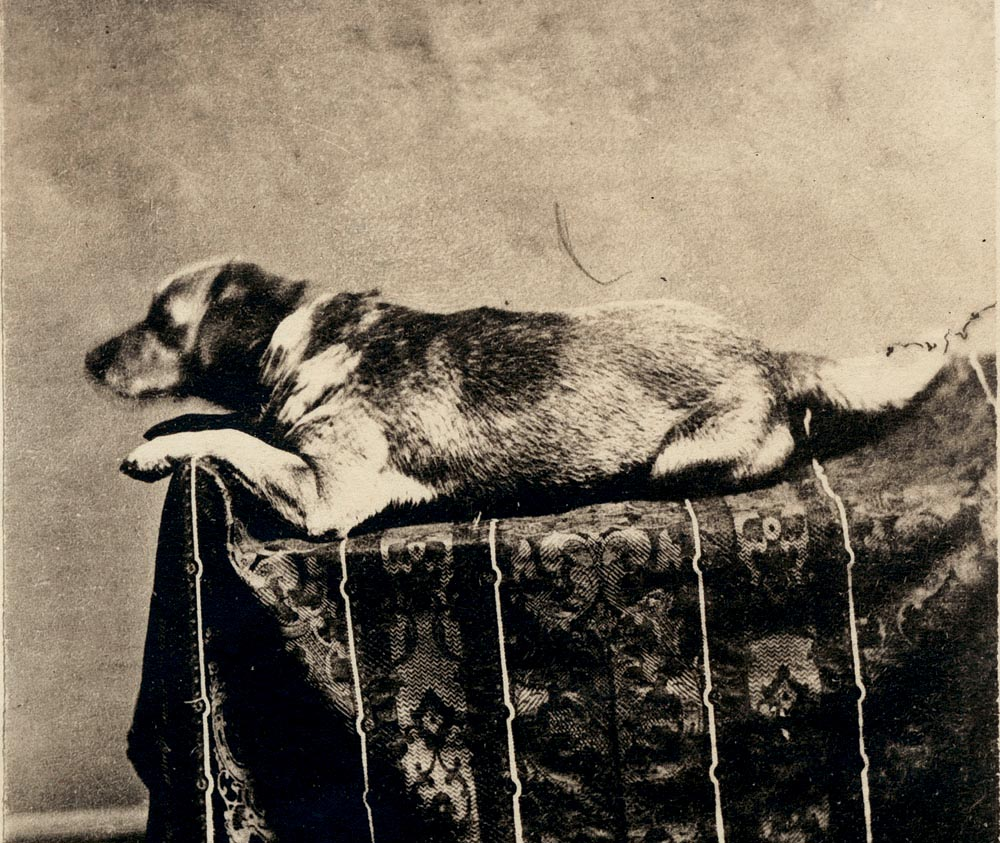 Abraham Lincoln and his dog Fido