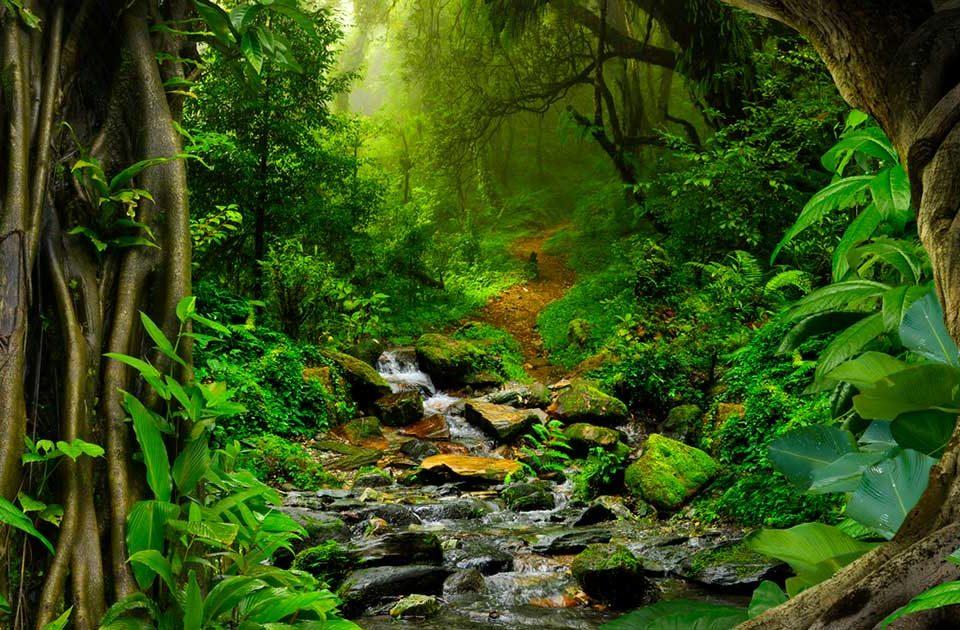 Amazon Rainforest Jungle Black River Wallpaper Hd