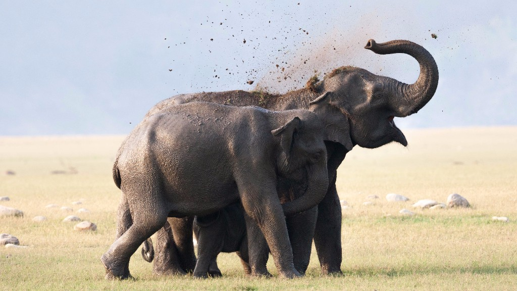 Elephant use sand or mud to keep themselves safe from sunburned.