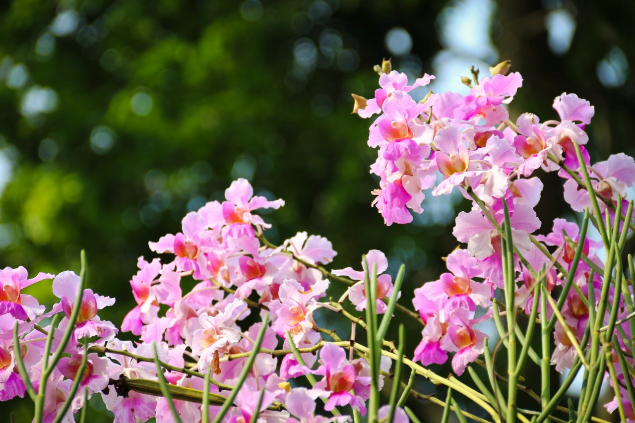 The largest tropical orchid garden in the world is found in Singapore.