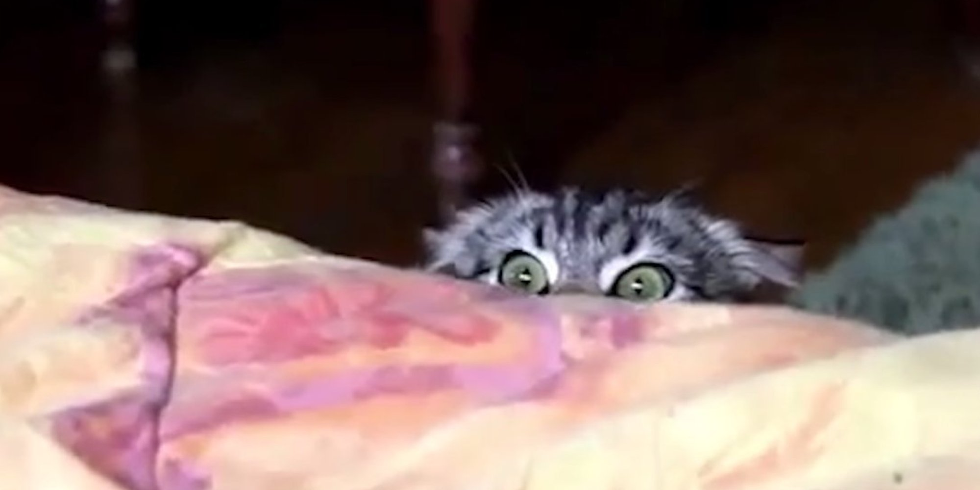 Cat Spies from CIA