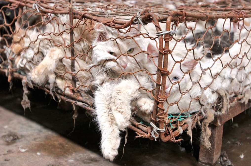 Cats eaten in China