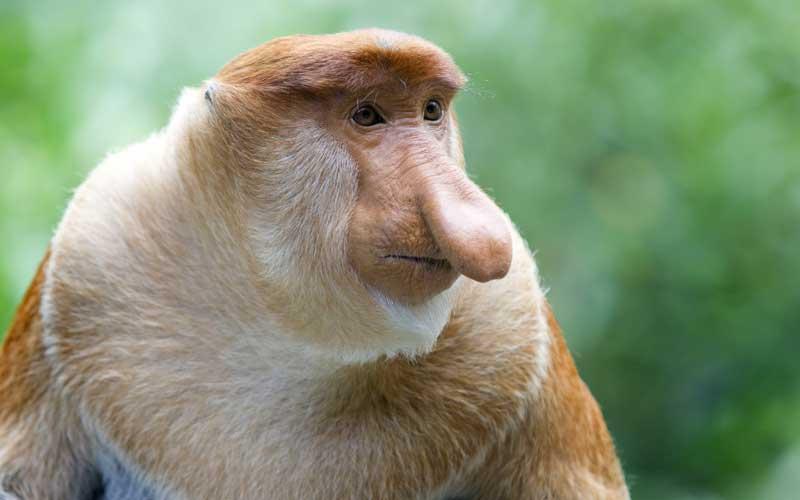 brazil maximum number of species of monkeys