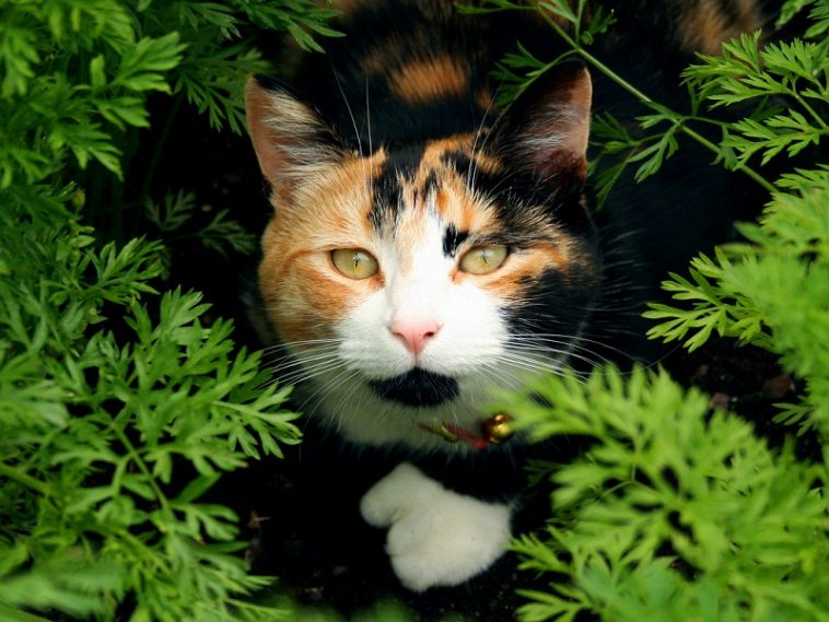 Black And White Calico Cat