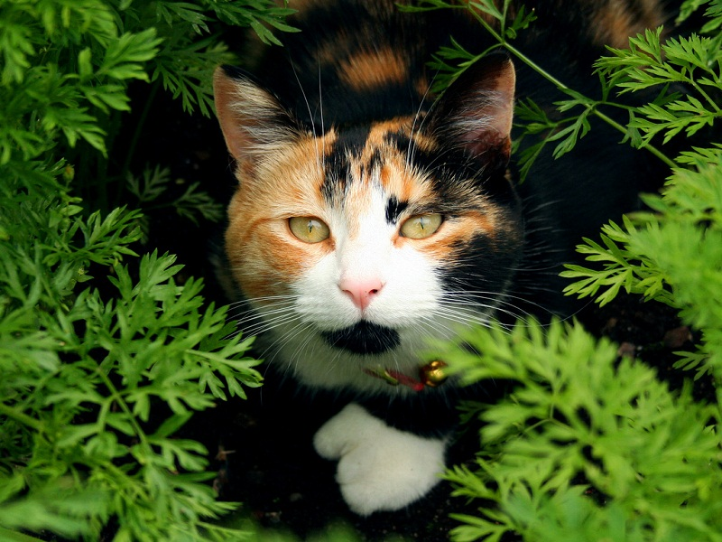 calico cats are pretty aggressive
