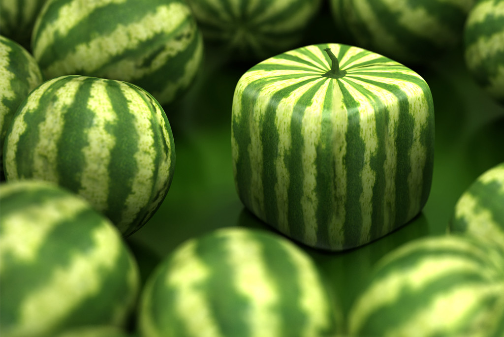 Square watermelons are grown in Japan
