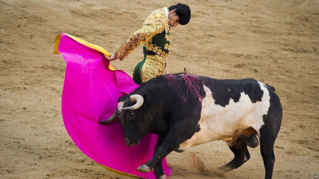 Bullfighting is the one of the popular sport in Spain