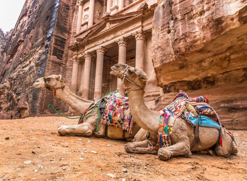 Petra city camels