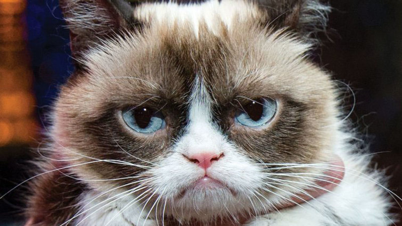 """Grumpy Cat"" YouTube star earned more money than Oscar winning actress Gwyneth Paltrow in 2014."