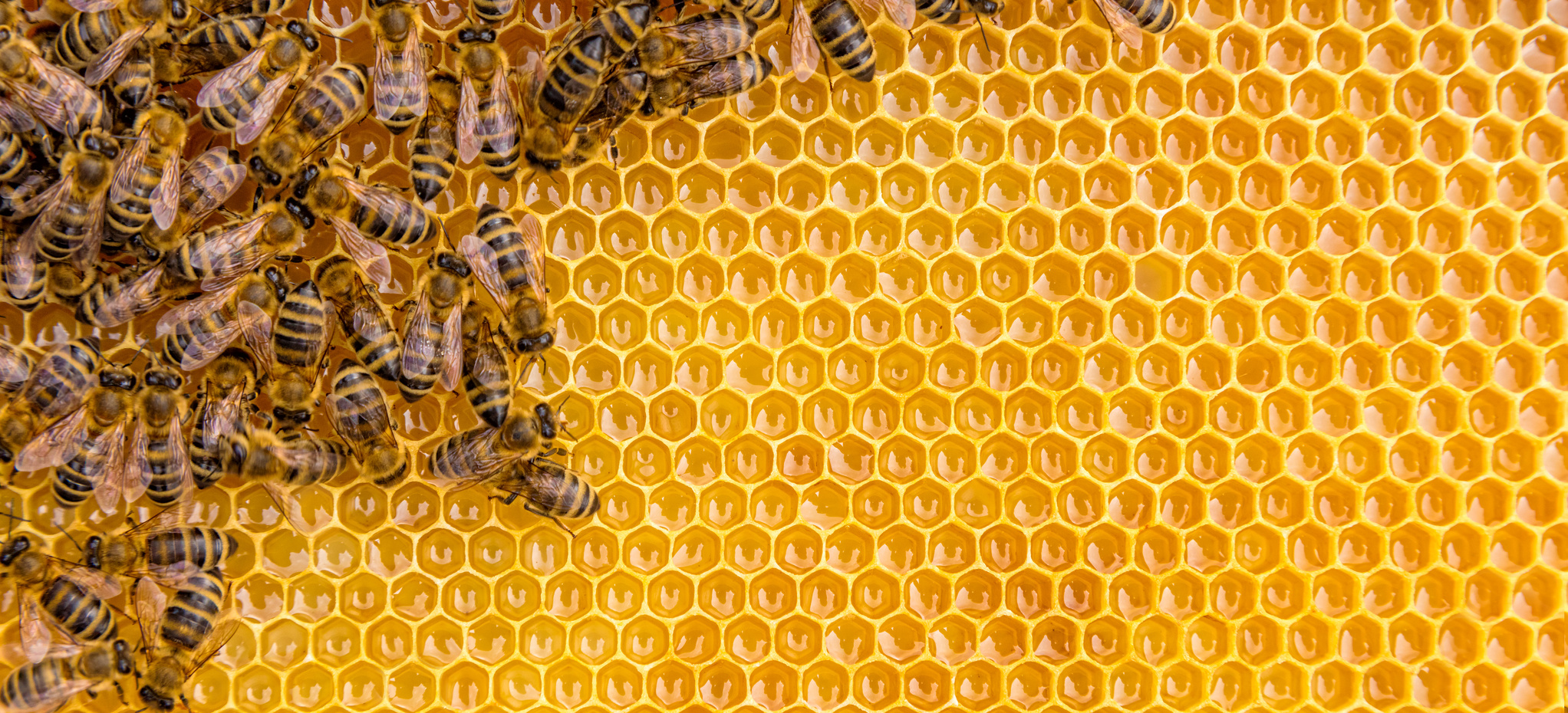 Bees are more attracted towards redheads than any other hair color - Serious Facts