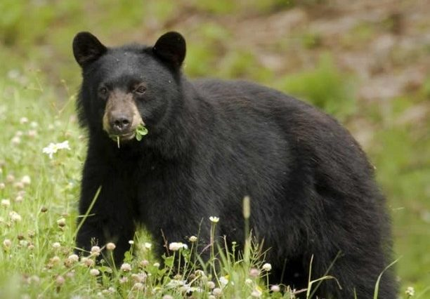 40 Interesting Bears Facts - Serious Facts
