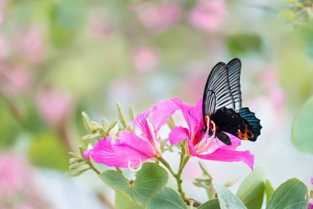 One out of every five butterfly species is found in Colombia.