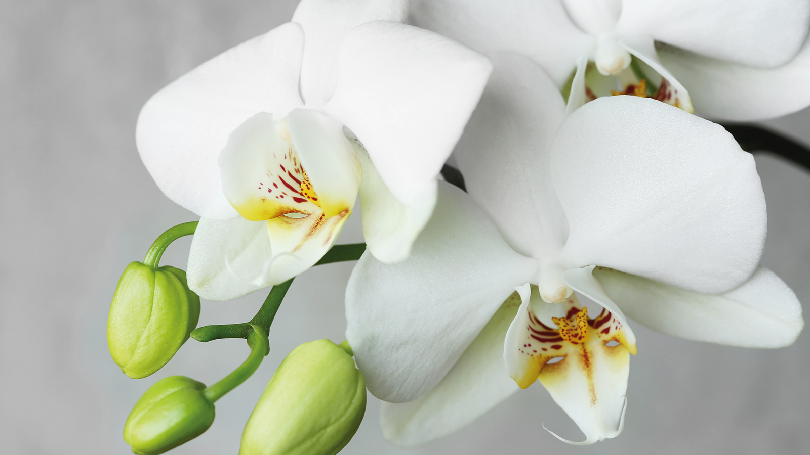 Over 4,000 species of orchids are found in Colombia.