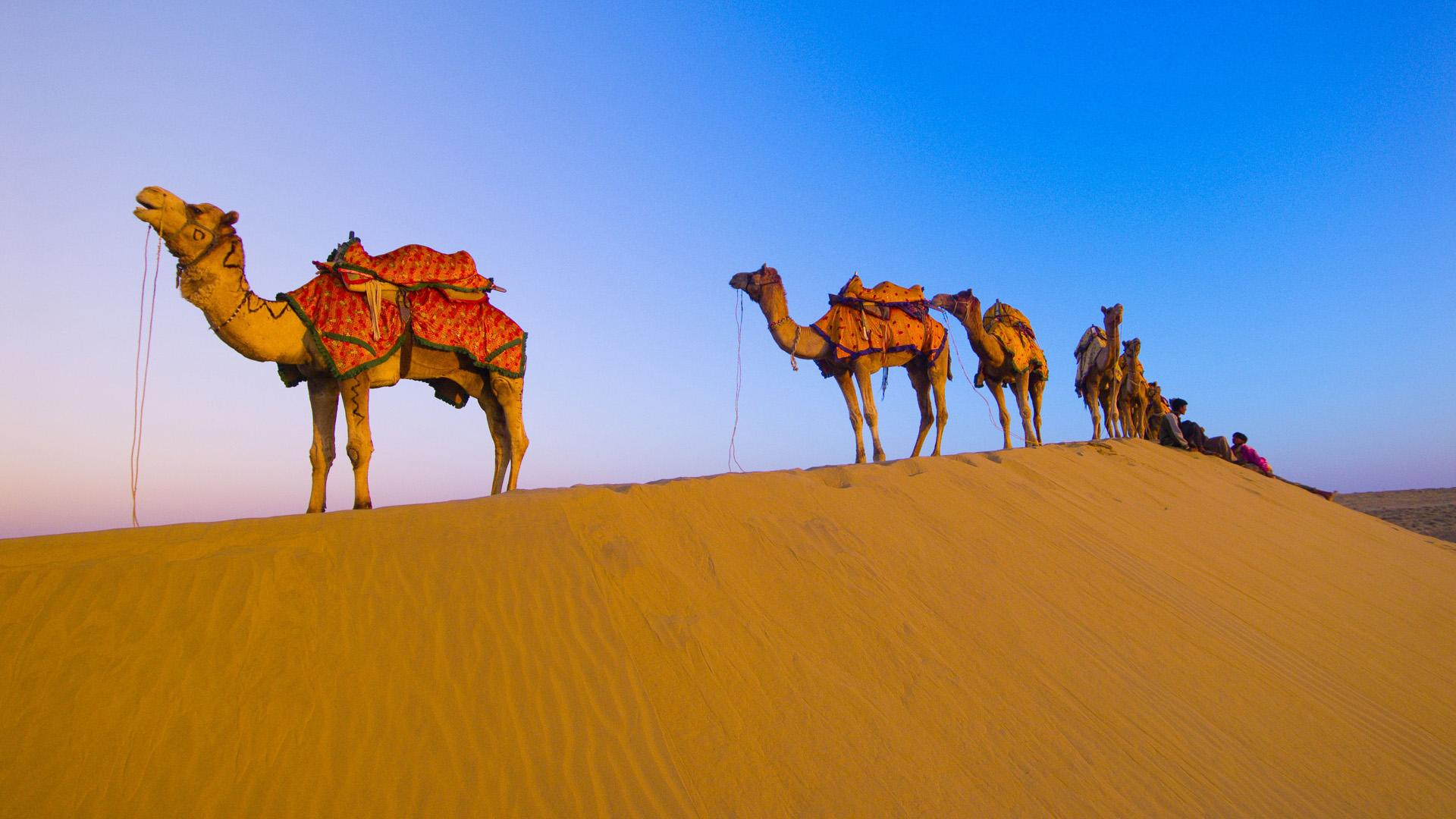 Camels generally travel 25 miles a day at 3 miles per hour.