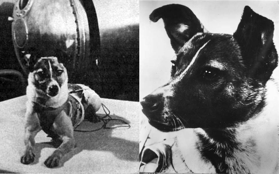 Laika, a Russian dog was the first animal who went in space in 1957.