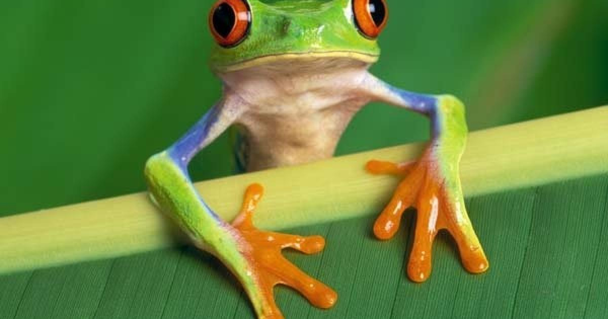 Not all frogs have webbed toes.