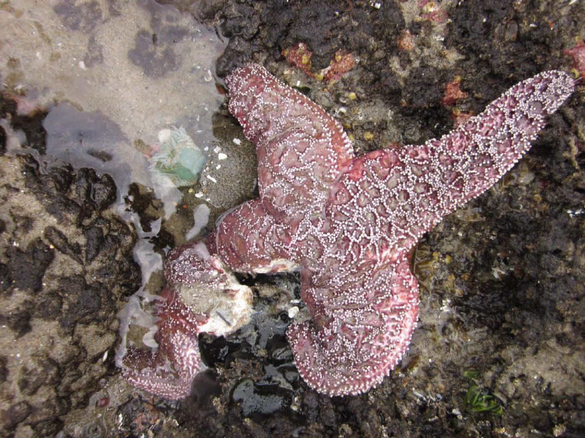 Starfish can regenerate lost arms.