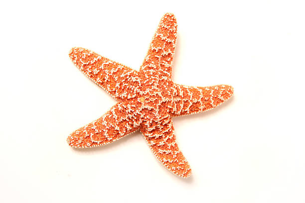 Starfish usually have five arms.