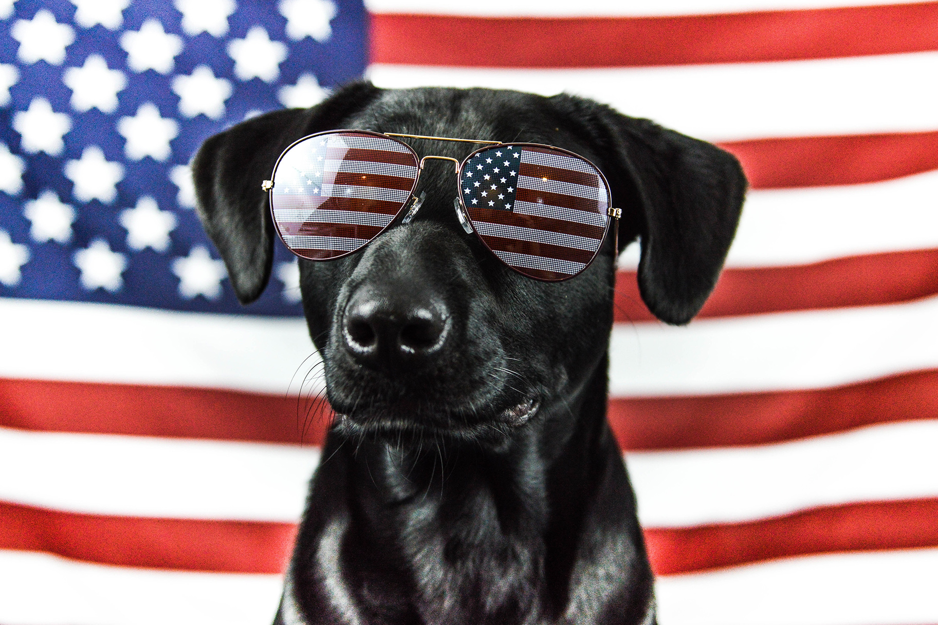 The U.S. has the highest dog population in the world.