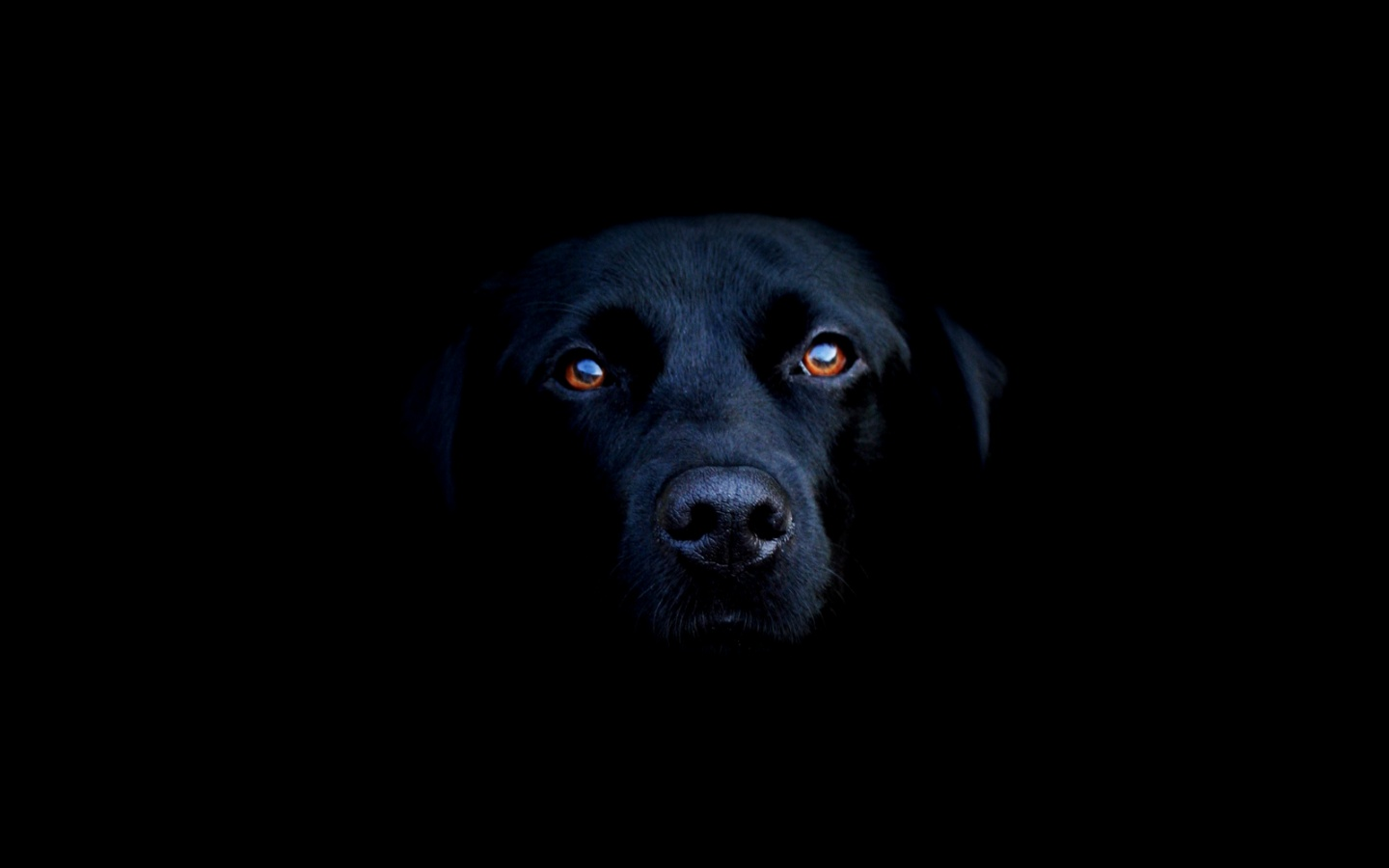 The eyes of dogs contain a special membrane, called the tapetum lucidum, which permits them to see in the dark.