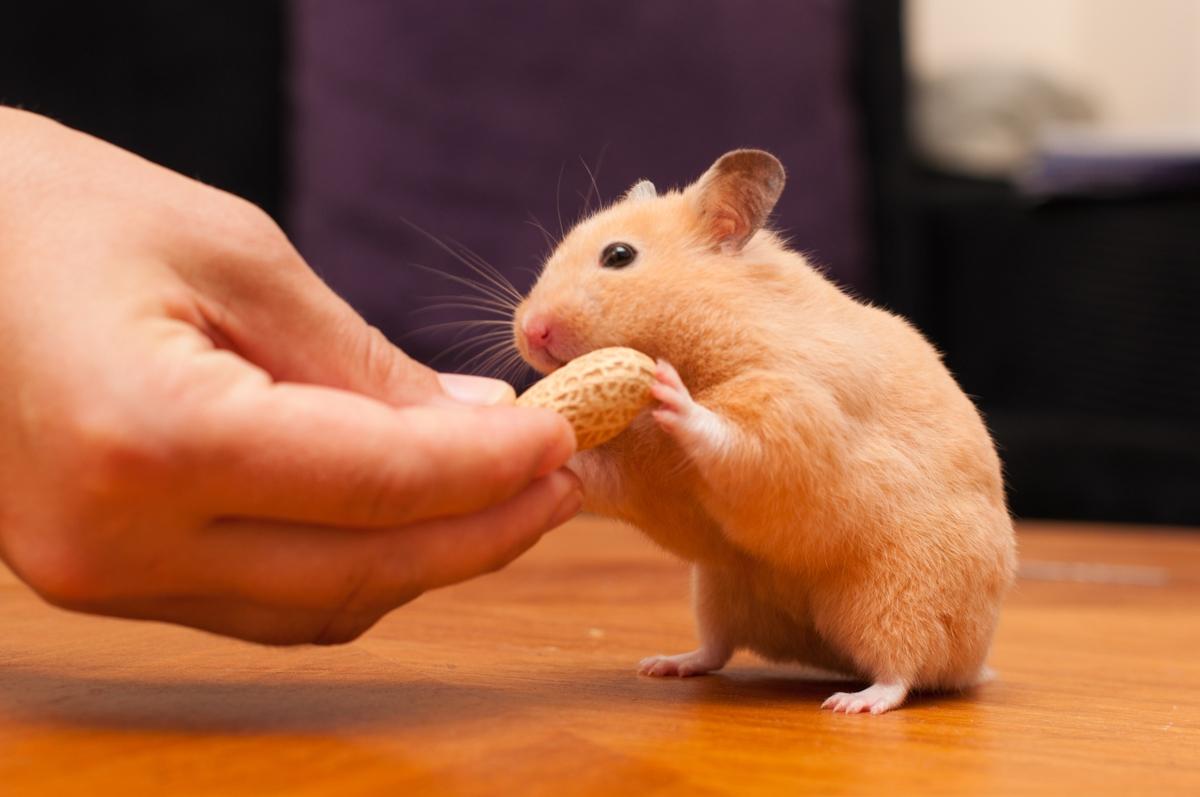 Hamster are omnivores.