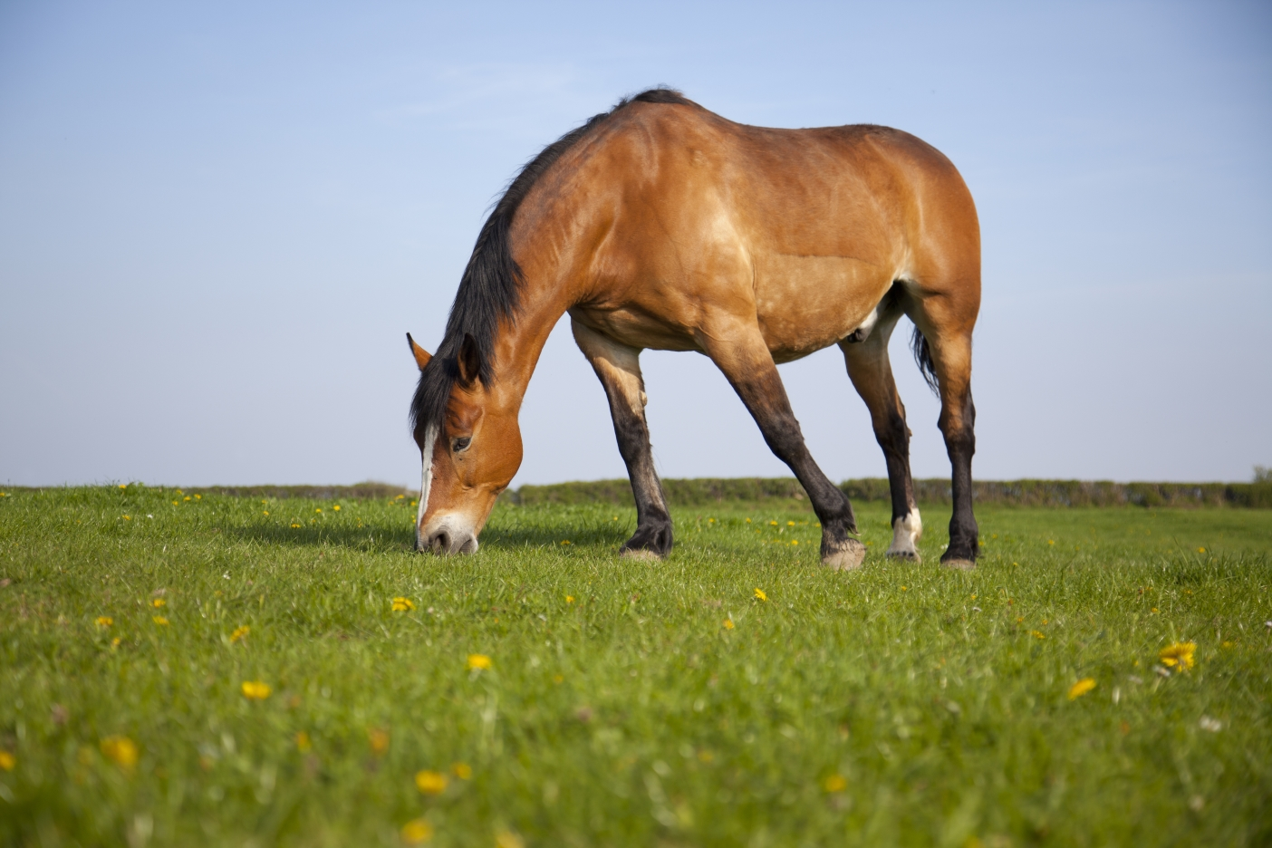 Horses are herbivores which means they only eat plants.