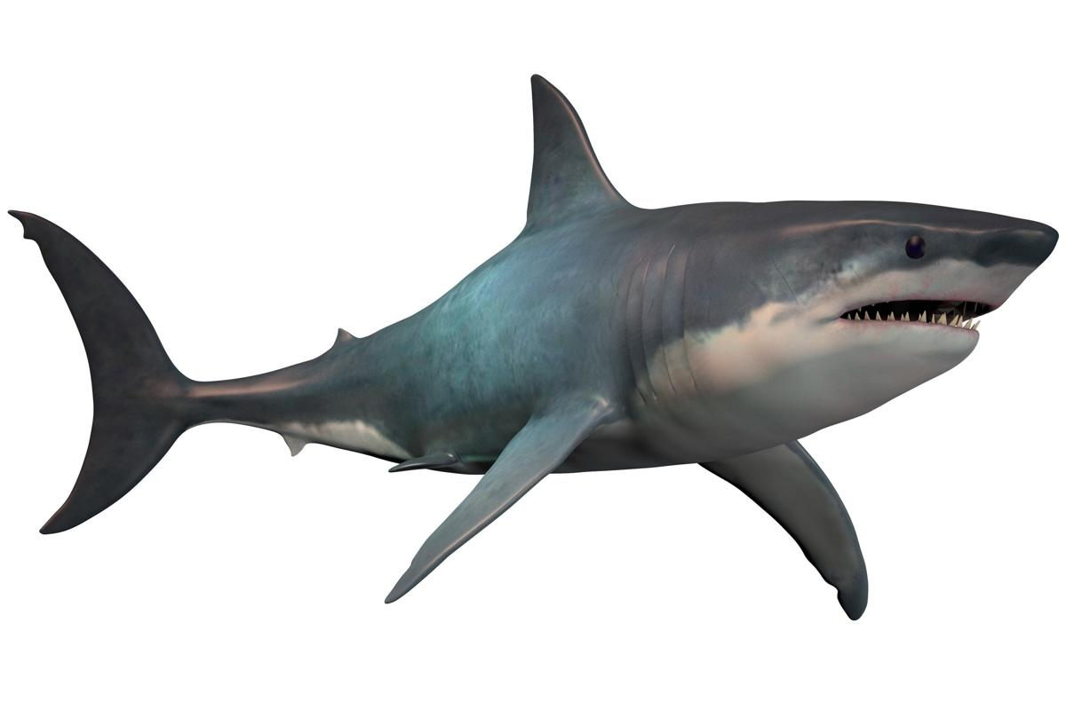 Amazing Megalodon sharks fed on almost anything that moved in the sea.