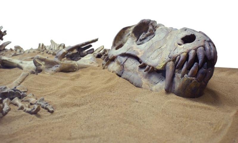 Dinosaur have 200 bones.