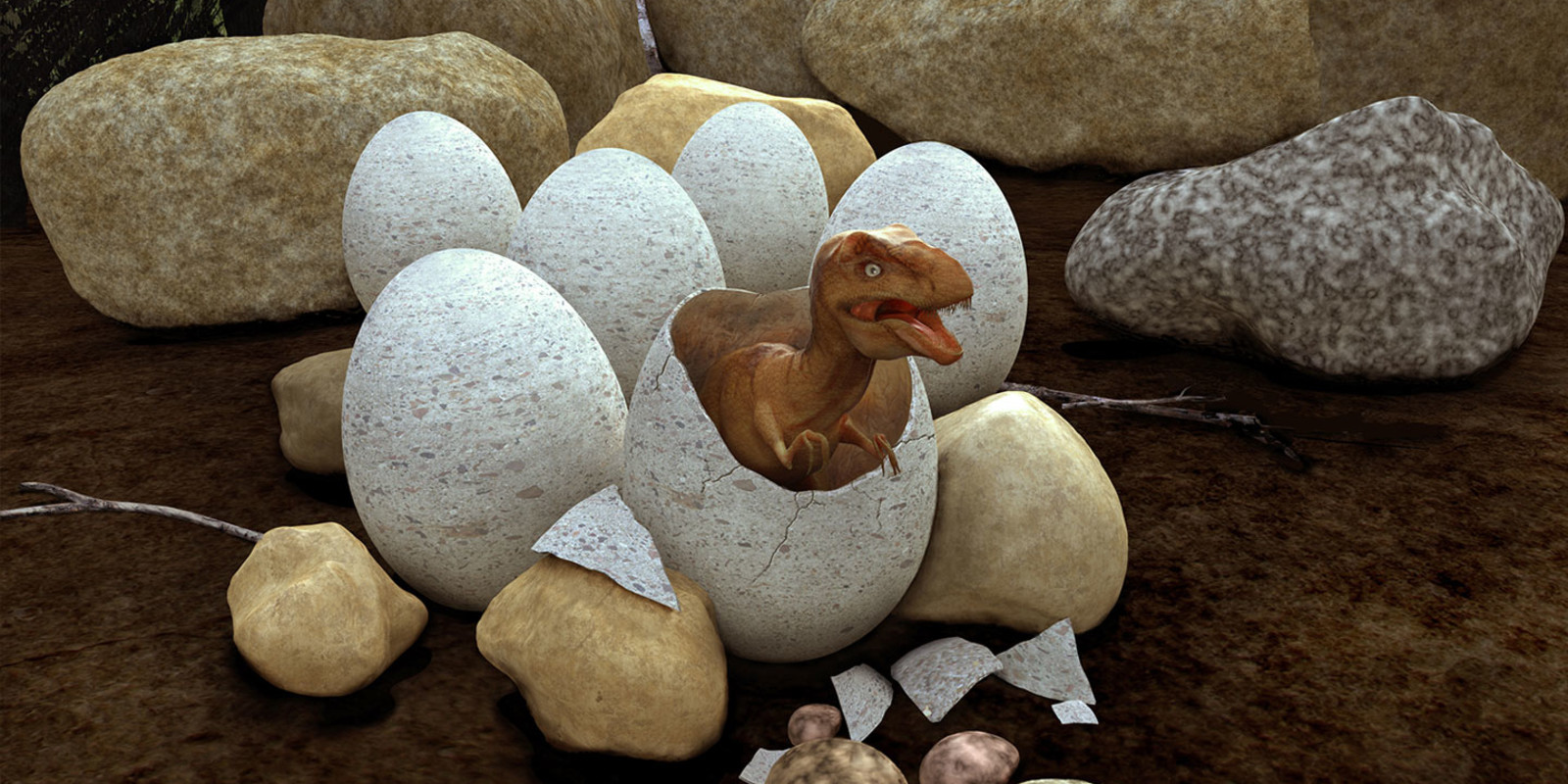 Female dinosaurs laid eggs up to 20 eggs at a time.