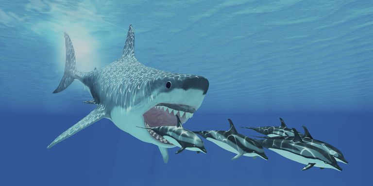 Megalodon was of the family LamnidaeThe Megalodon.