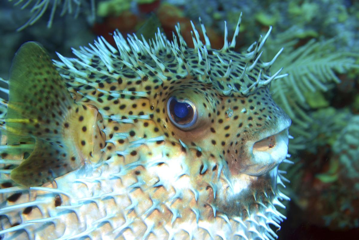 Puffer fish can blink his eyes.