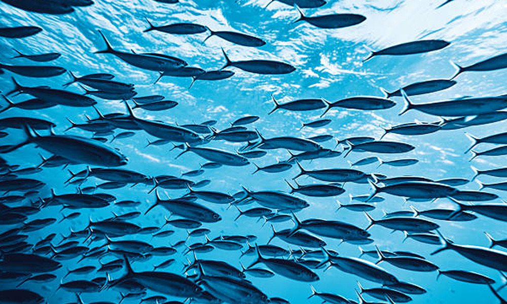 There are 30000 known species of fish.