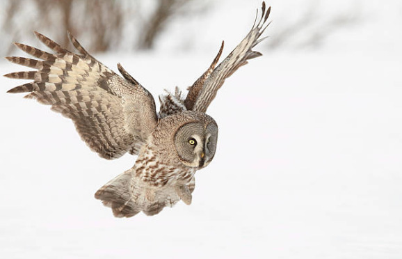 Owl can fly silently.
