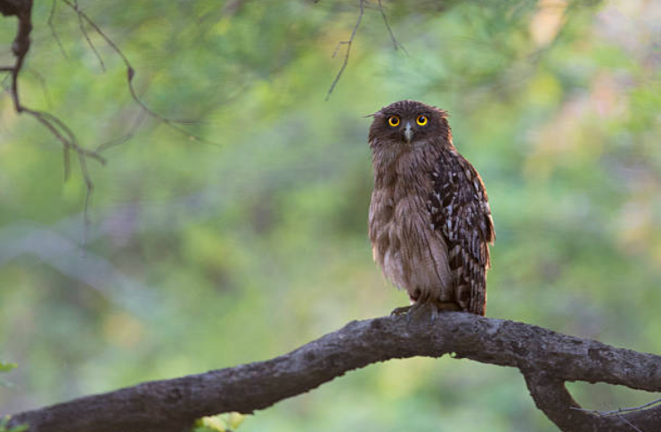 There are around 200 different owl species.