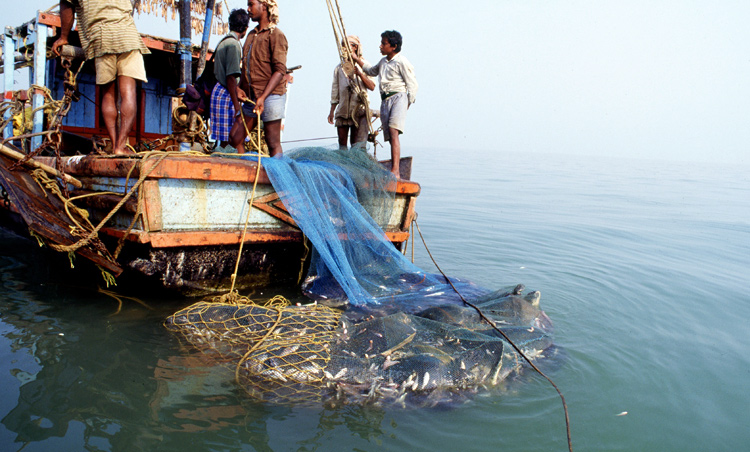 Trawling is one of the most common methods of commercial fishing in the world.