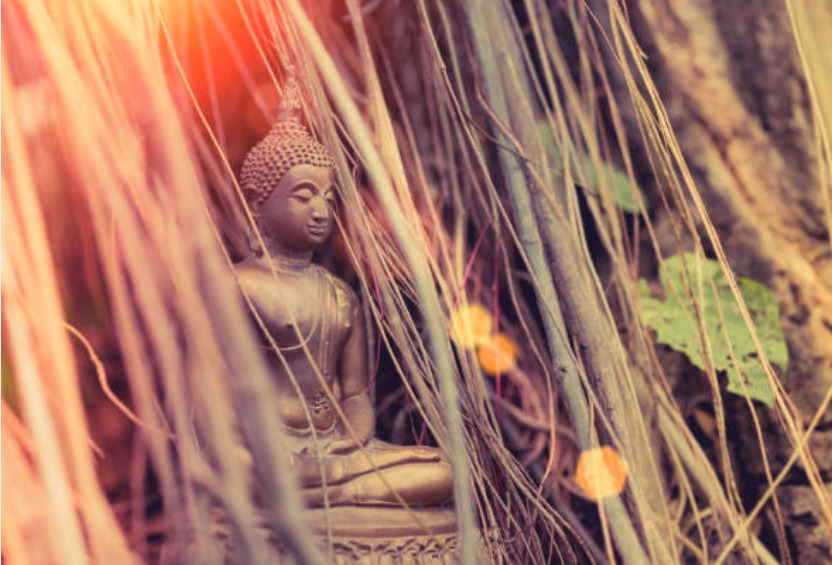 Young Siddhartha vowed to sit under a fig tree and meditate to achieve enlightenment.