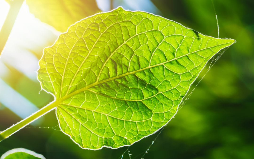 The sun produces energy that supports all life on earth through a process known as photosynthesis.