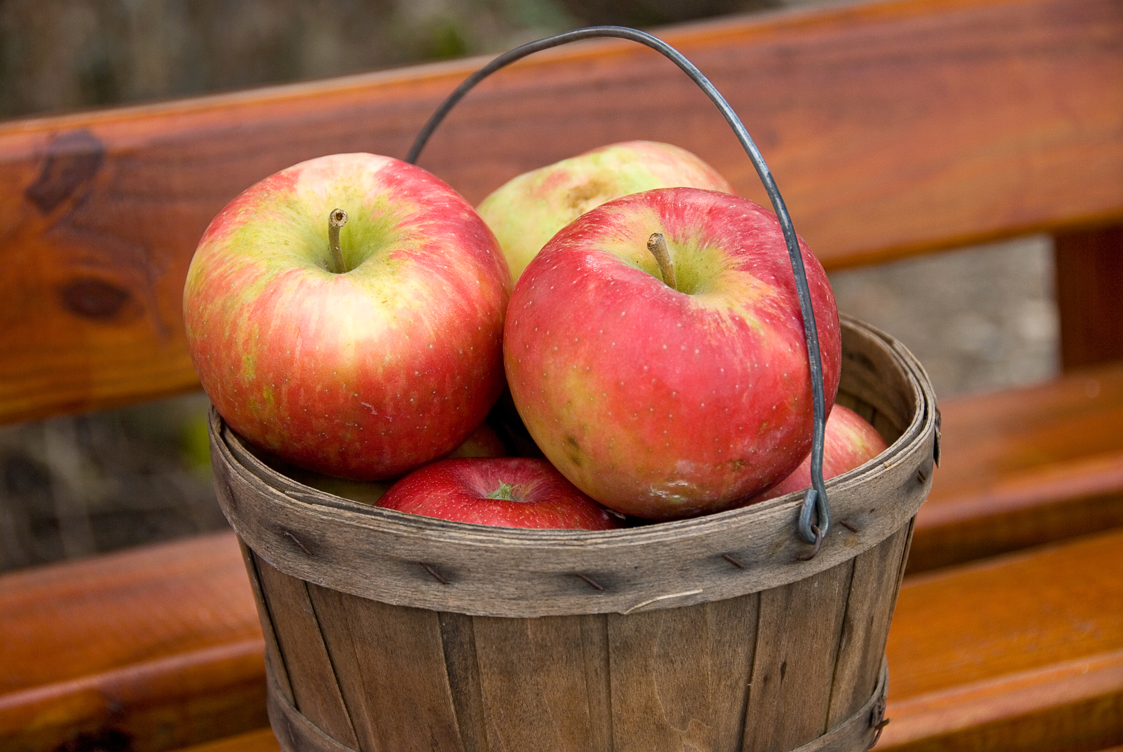 A peck of apples weighs 10.5 pounds.