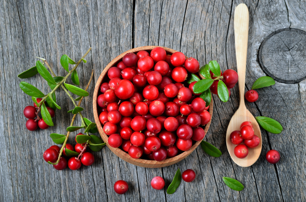 Cranberries have slender, wiry stems that are not thickly woody and have small evergreen leaves.