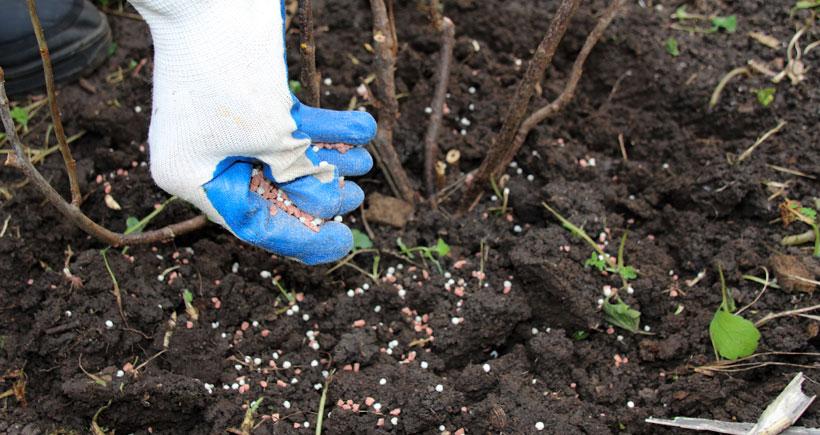Peach plants require fertilizers rich in nitrogen.