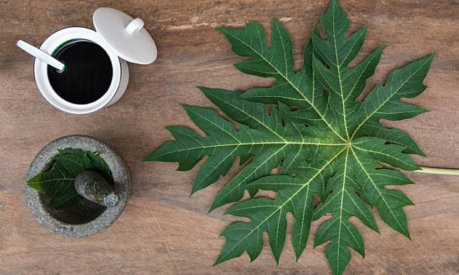 Tea made from papaya leaves is consumed in some countries as protection against malaria.