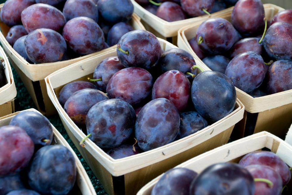 In Japan, February is the month for plums.