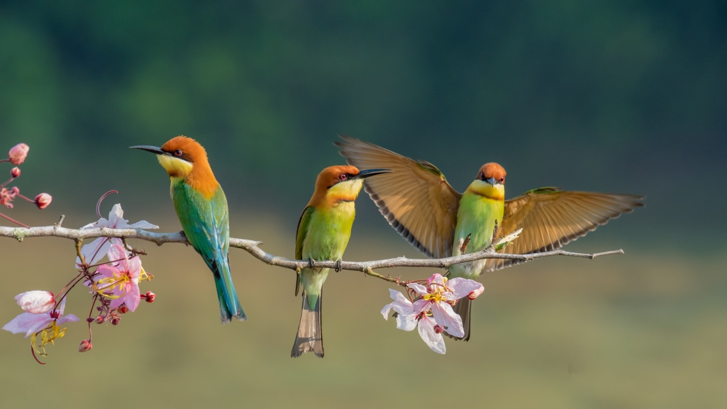 Jamaica is home to about 289 species of birds.