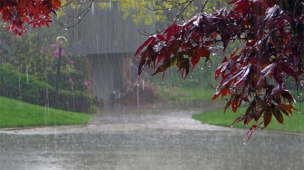 Rainy-tree