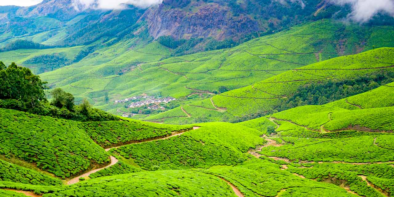 Kolukkumalai Tea Estate of Munnar, India is the highest tea estate
