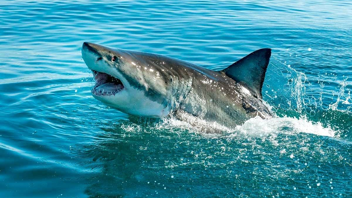 The ears of sharks are located inside their heads.